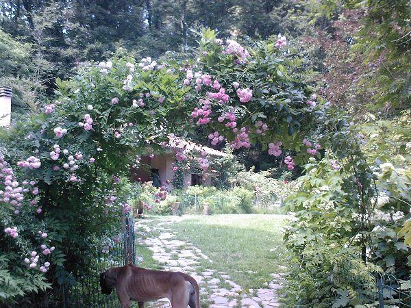 Ristorante il giardino segreto collesalvetti livorno