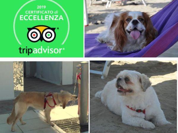 Spiagge per cani rimini dog beach e stabilimenti balneari con animali ammessi a rimini - Bagno 38 rimini ...