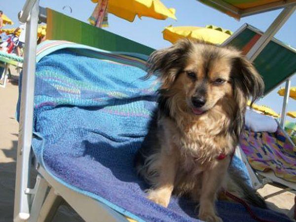 Spiagge riviera romagnola per animali dog beach e - Bagno wanda cesenatico ...