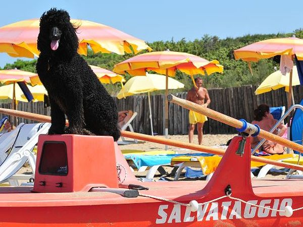 Spiaggia Dog Beach San Vincenzo