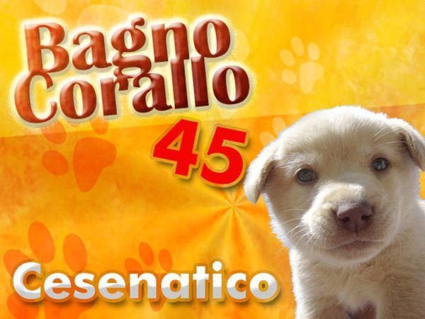 Vacanze con animali ammessi strutture turistiche che accettano cani e gatti - Bagno romagna cesenatico ...