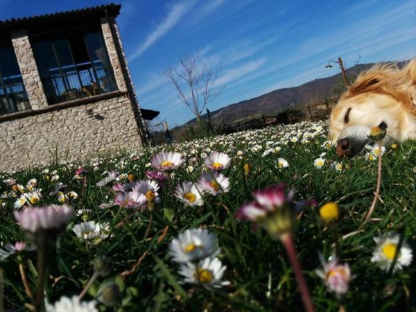 Agriturismi per cani rieti masserie e country house con for Animali domestici sequoia parco nazionale pet friendly
