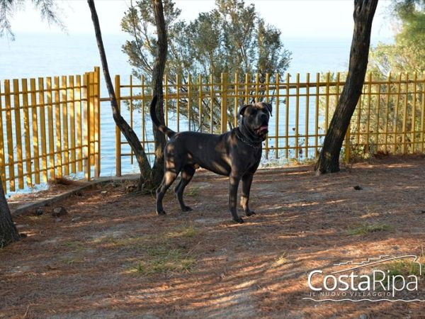 Costa Ripa Villaggio e Dog Beach