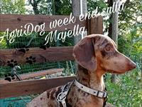 Agriturismi per cani pescara masserie e country house for Animali domestici sequoia parco nazionale pet friendly