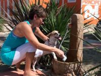 Spiagge animali emilia romagna dog beach e stabilimenti balneari con cani ammessi in emilia - Bagno 38 rimini ...